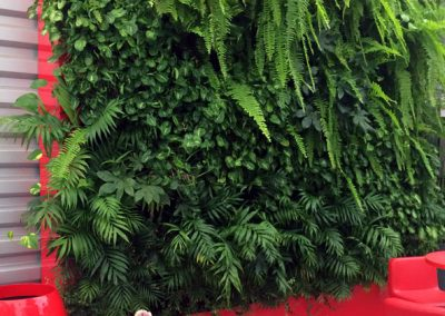 Mur végétal - plantes naturelles