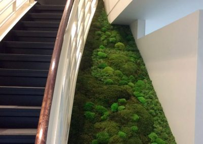 Mur végétal - Descente d'escalier - Plantes stabilisées