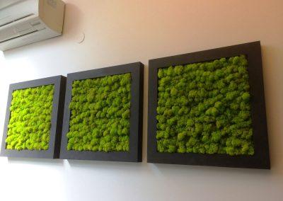 Mur végétal Lichen