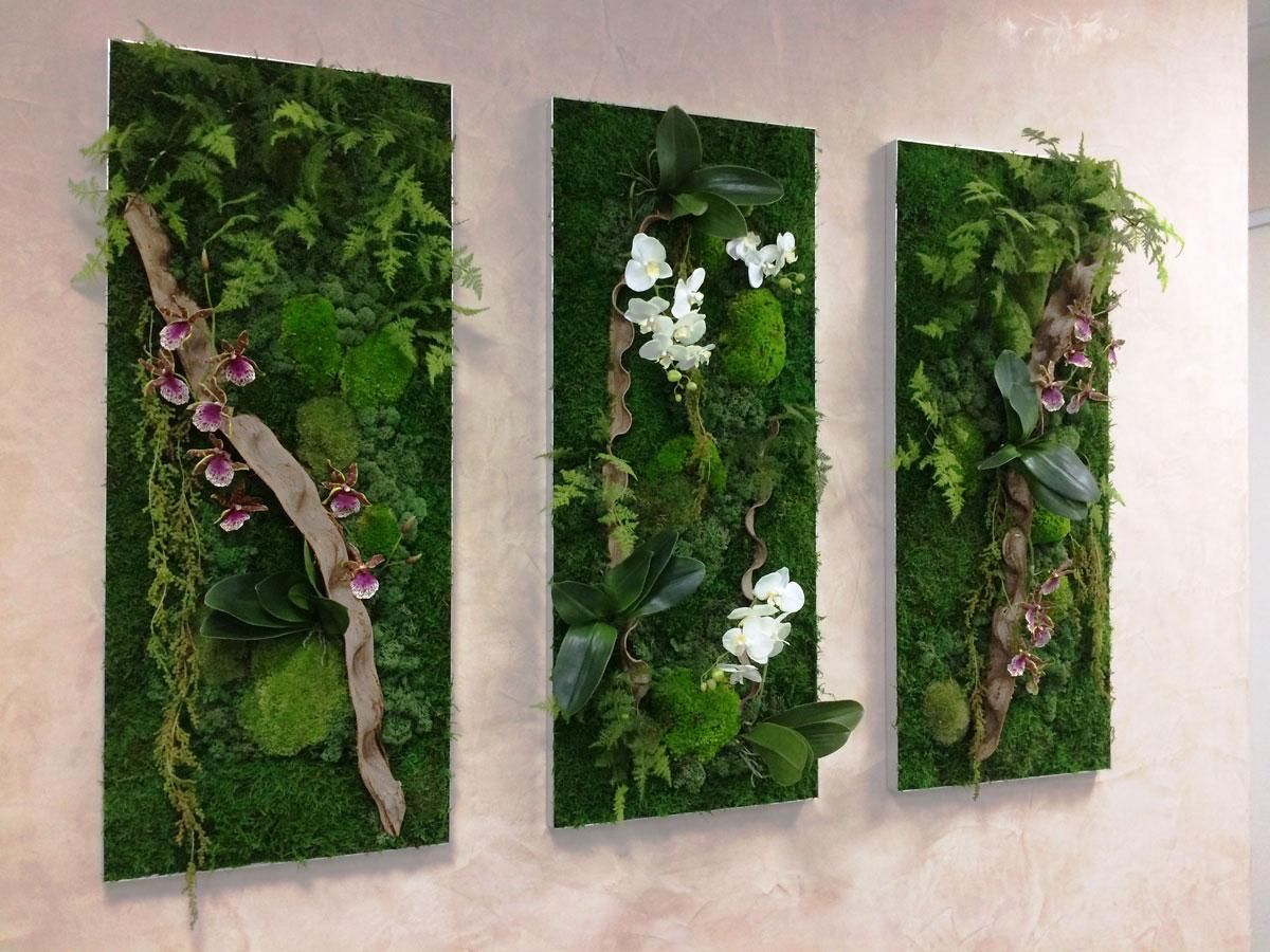 Plante Sur Les Murs murs végétaux - hydrodécor