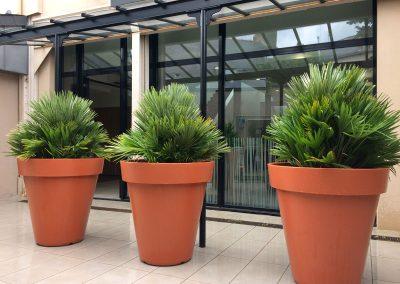 Décoration TERRASSE plantes naturelles