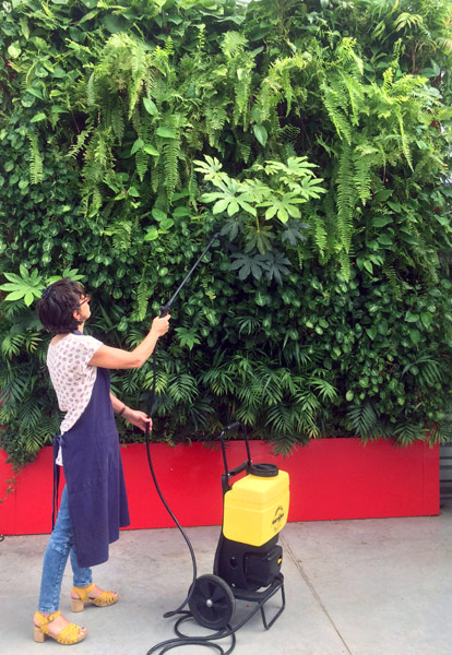 Entretien plantes naturelles