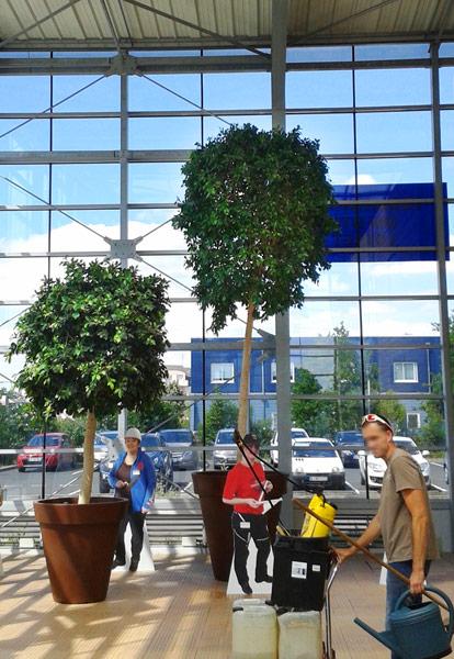 Entretien plantes artificielles