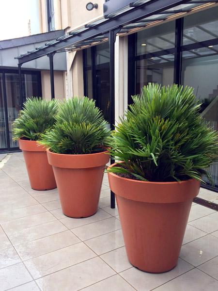 Décoration terrasses plantes